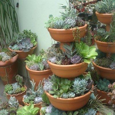 Succulent Container Garden   Google Search