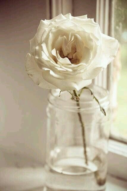 My Story... roses, my favourite flower