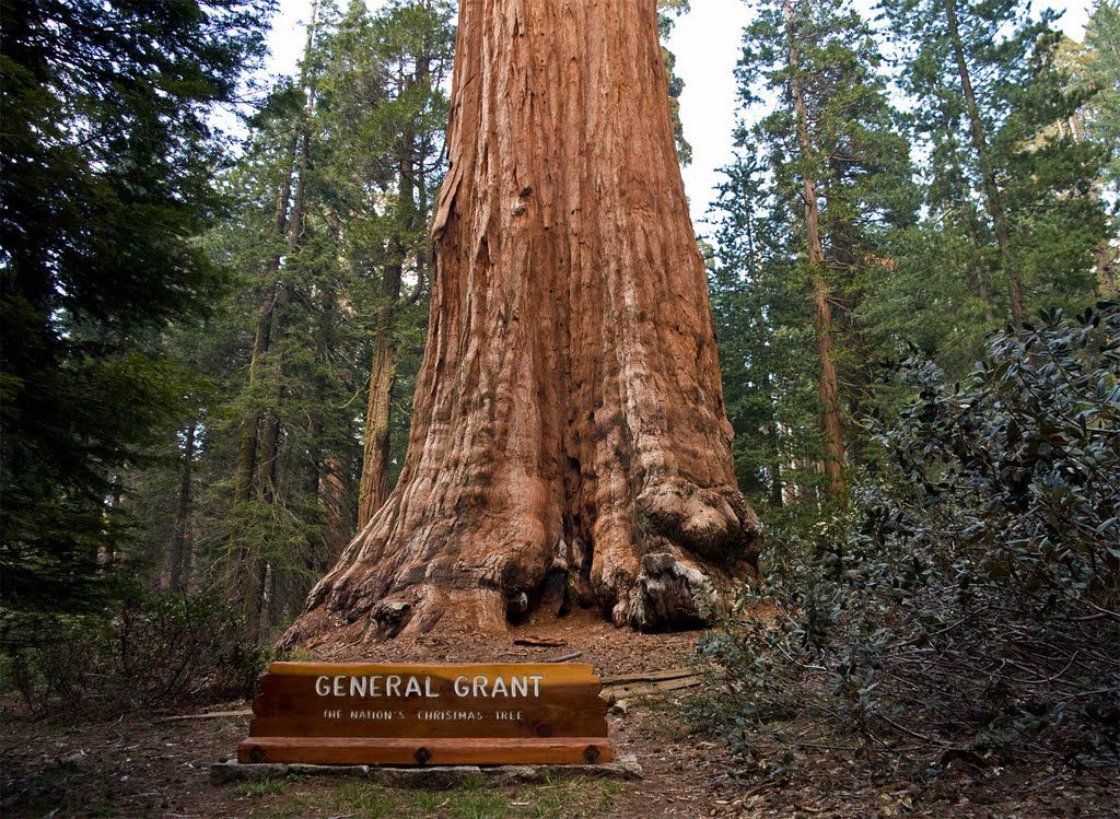 Image From Http Static Panoramio Com Photos Large 55926507 Jpg National Parks National Christmas Tree Sequoia National Park