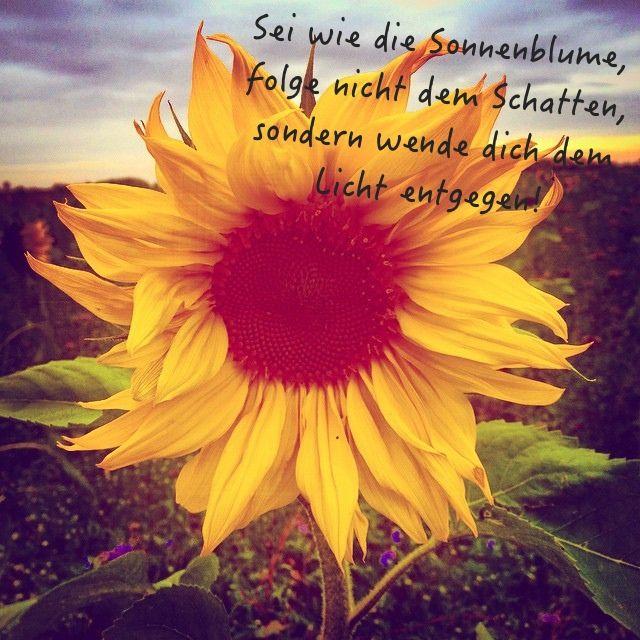 Sei wie die Sonnenblume, folge nicht dem Schatten, sondern ...