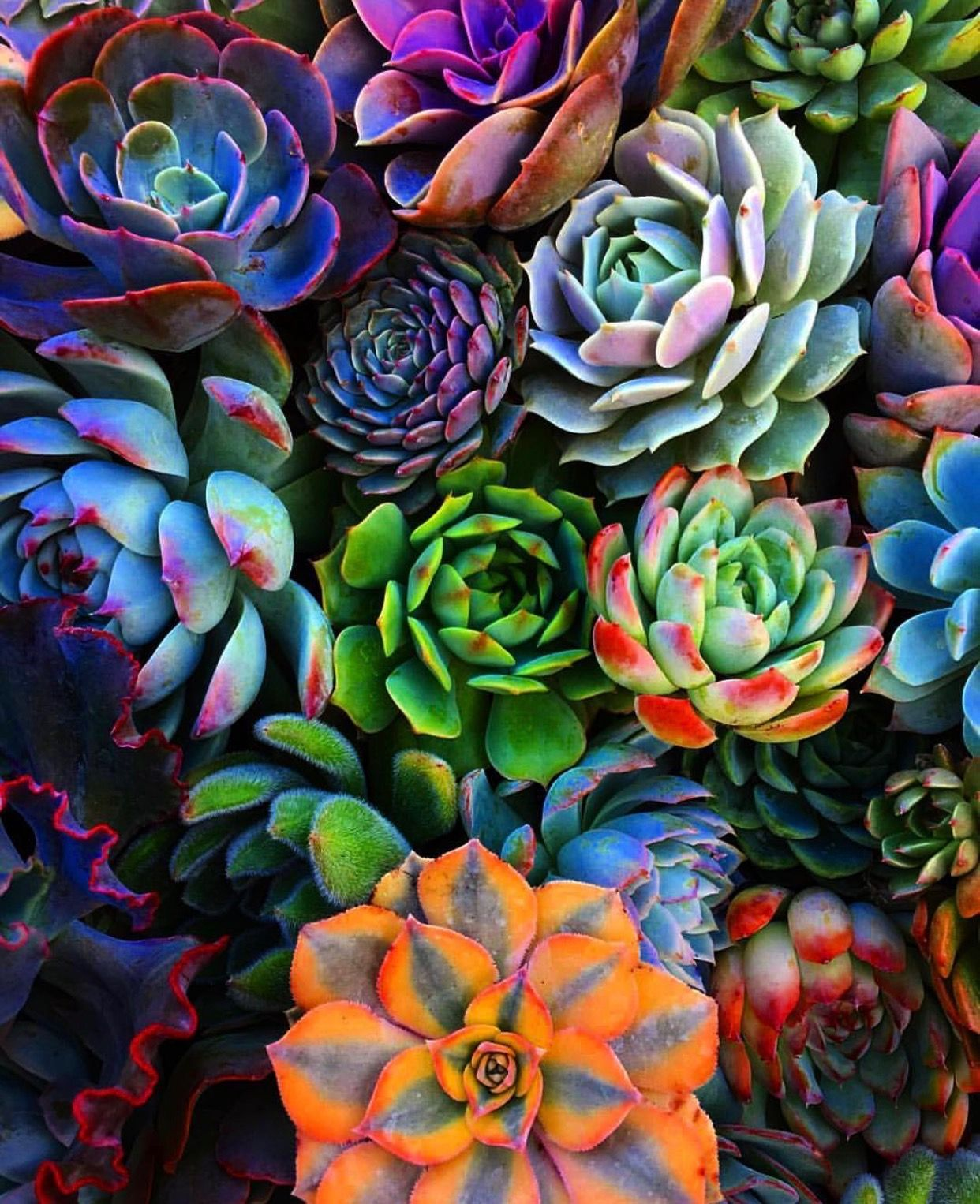 This color pallette is incredible Succulents, Plants