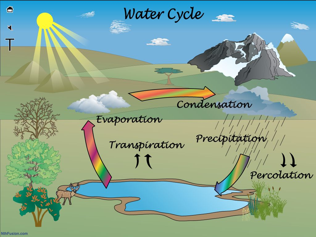 Water Life Cycle For Kids