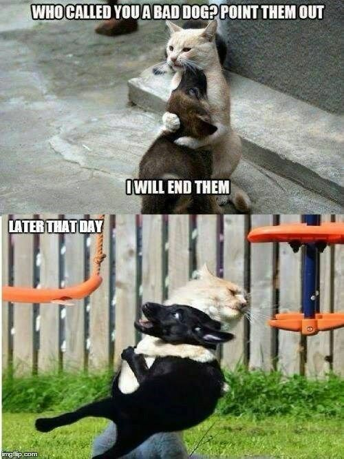 Have Some Laughs With These Animal Memes