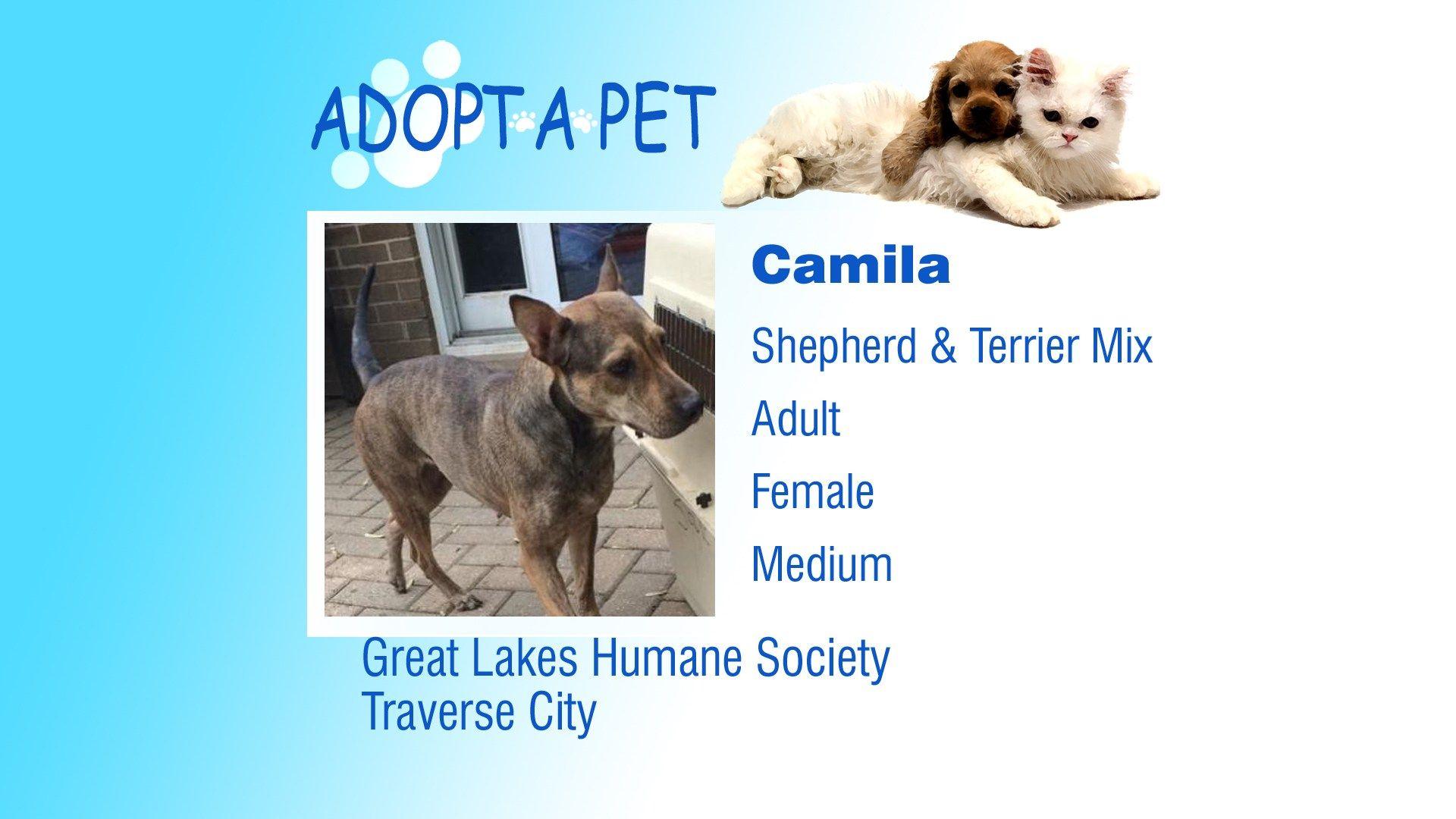Adopt A Pet Shy, Camila, Foxy Northern Michigan's News