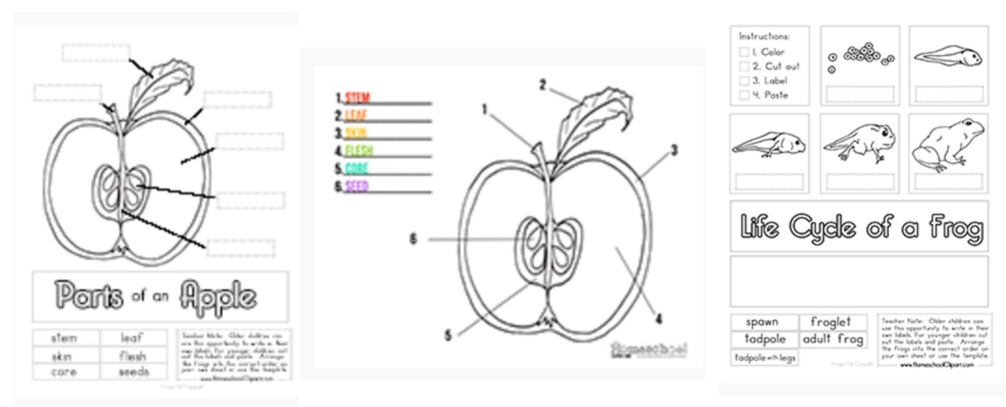 Science Charts And Worksheets