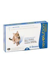 Page Not Found Cats Flea Prevention Heartworm