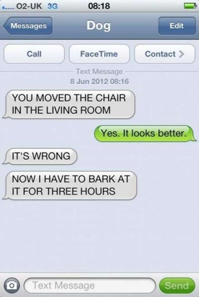 Distractify The 33 Hilarious Things Dogs Would Say If They Could