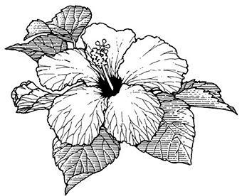 Pin By Cassandra Goode On Tats Hibiscus Flower Tattoos Hibiscus Tattoo Flower Tattoo Designs