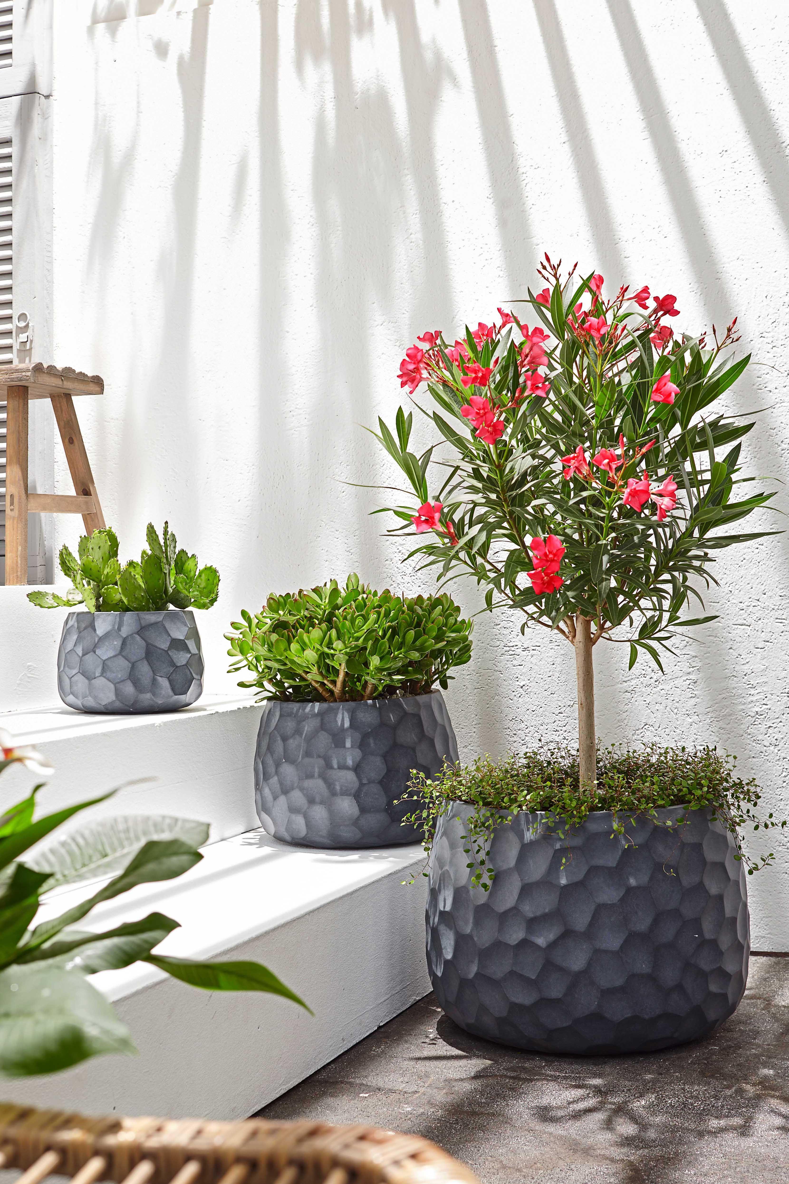 Oleander Pflanzen Dekor Gartendesign Ideen Topfpflanzen