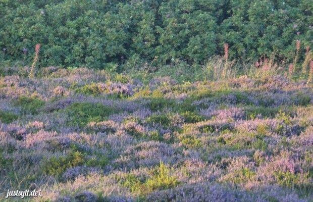 Geführte Spaziergänge durch die Braderuper Heide