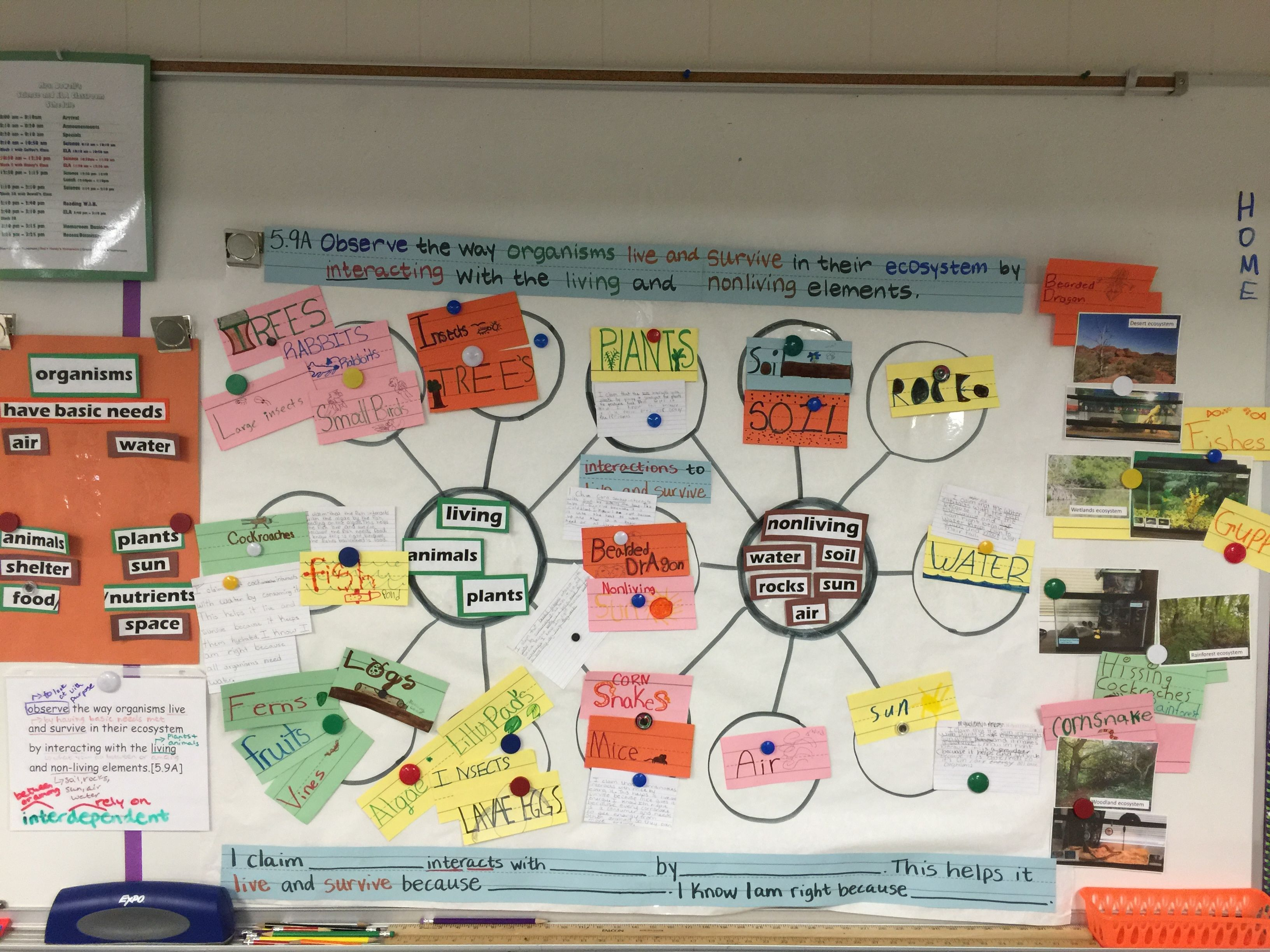 Science Teks 5 9a Observe The Organisms Live And Survive