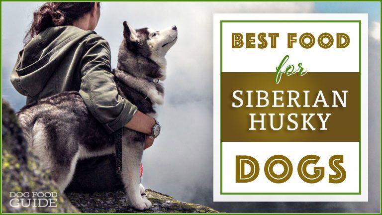 9 best healthiest dog food for siberian huskies in 2020