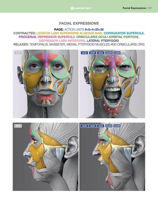 Anatomy Of Facial Expressions Pdf E Book Em 2020 Corpo