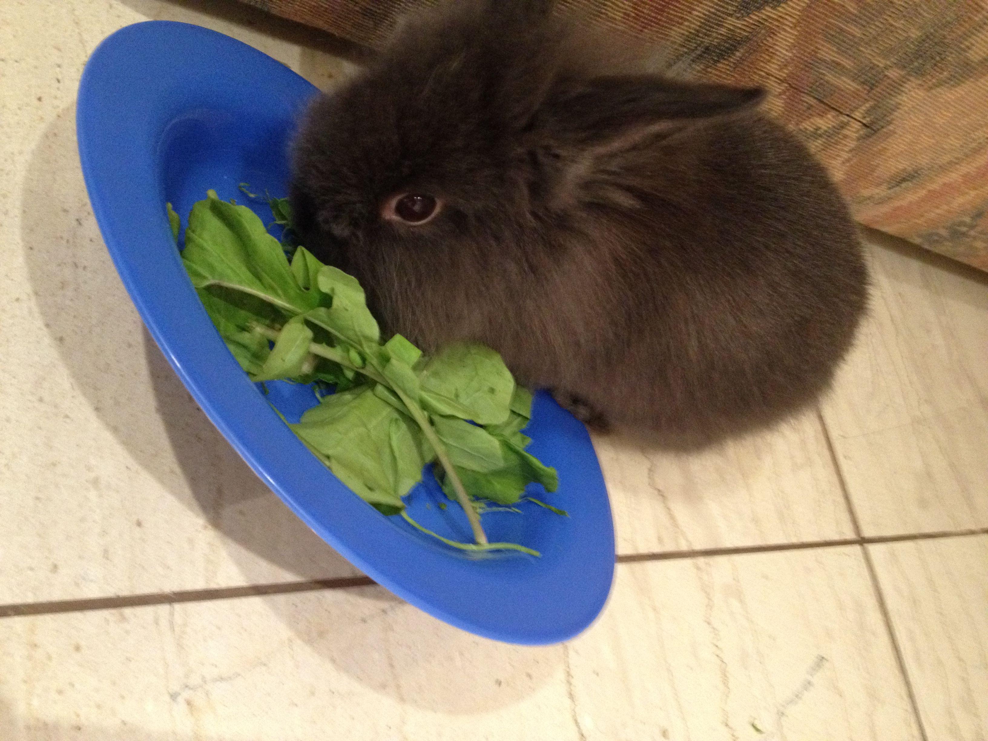 Jeremias eating