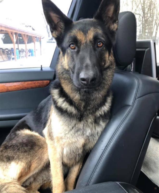 Found Dog Female Zanesville Oh Usa 43701 On January 15 2019