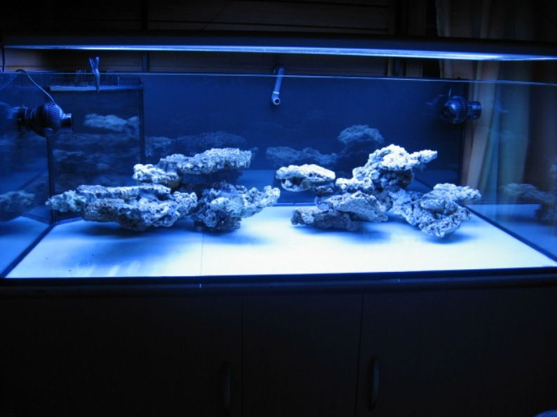 reef aquascaping - Buscar con Google | Saltwater ...