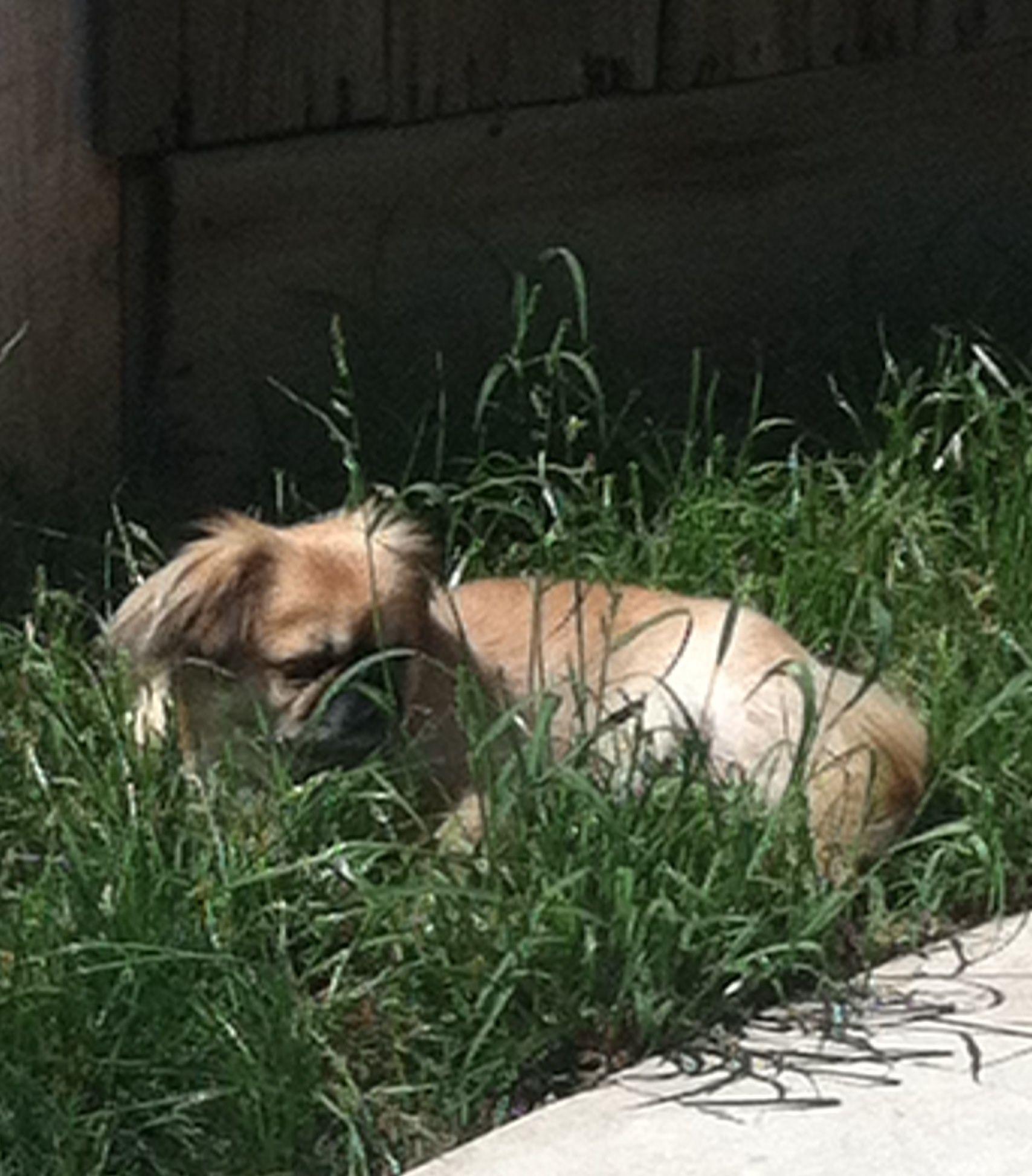 Laying in sun