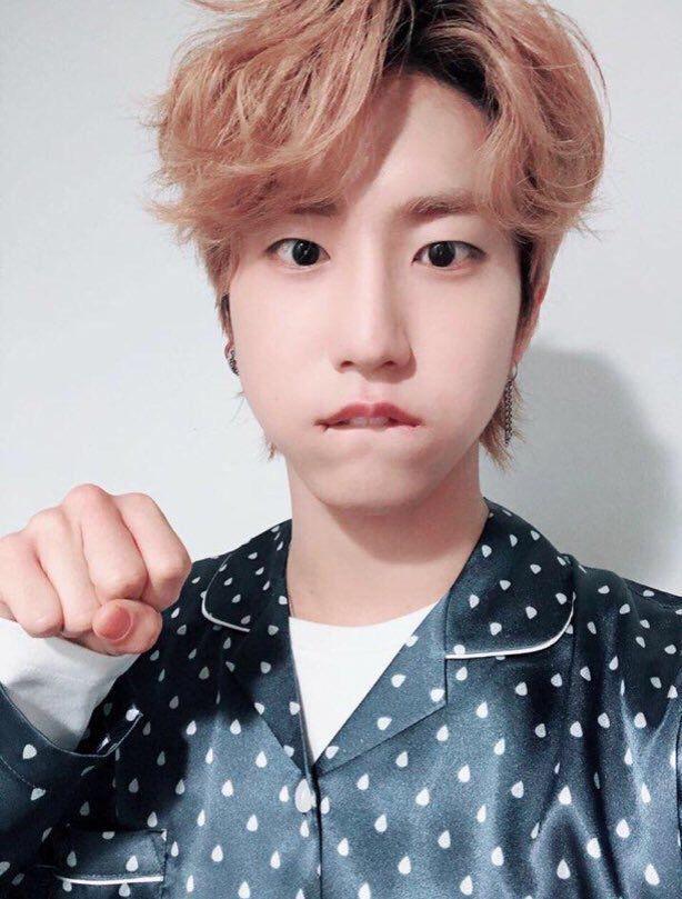 My Idol Han Jisung Special Chapter Han Jisung Fact Stray Kids Baby Squirrel