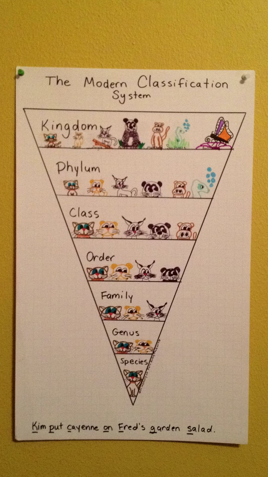 Modern Classification System