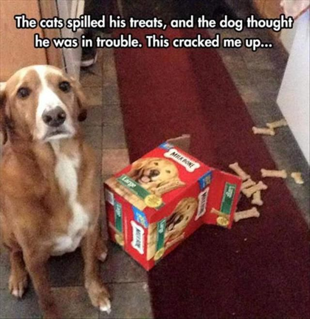 Funny Pictures of The Day  41 photos  Morably