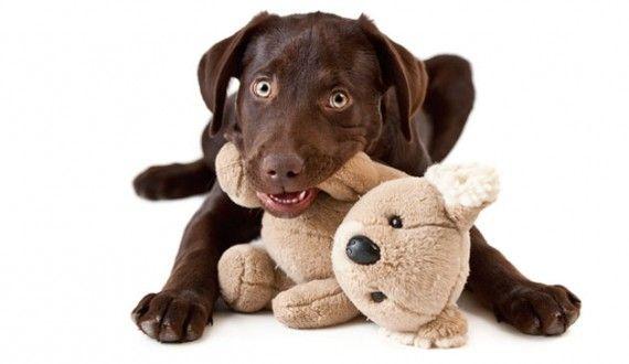 20141202 brinquedos para cachorro 8 570x330 Brinquedos para Cachorro