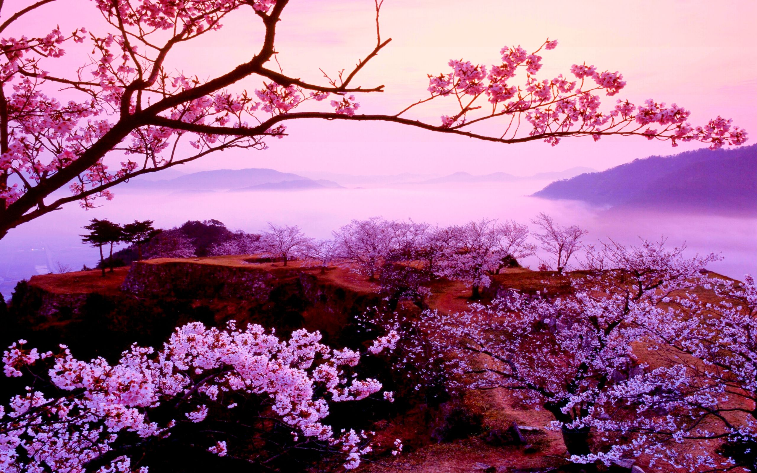 1724503 2560x1600 sakura 2560 1600 nature pinterest japan and paintings. Black Bedroom Furniture Sets. Home Design Ideas