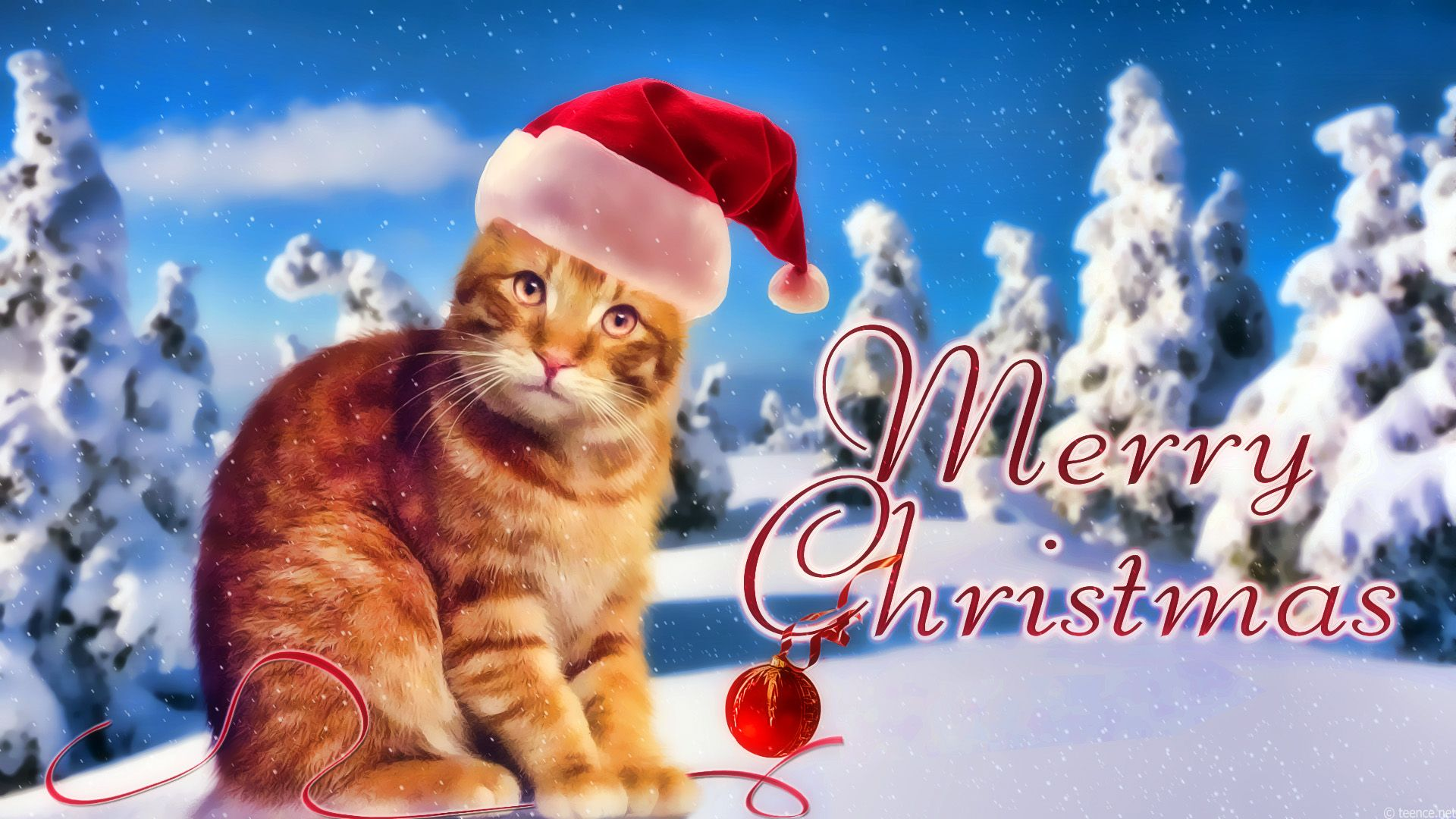 Pin By Sharon Rivers On Christmas Kittys Cat Wallpaper