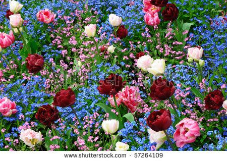 Beautiful spring flowers canada canada pinterest vancouver beautiful spring flowers canada mightylinksfo