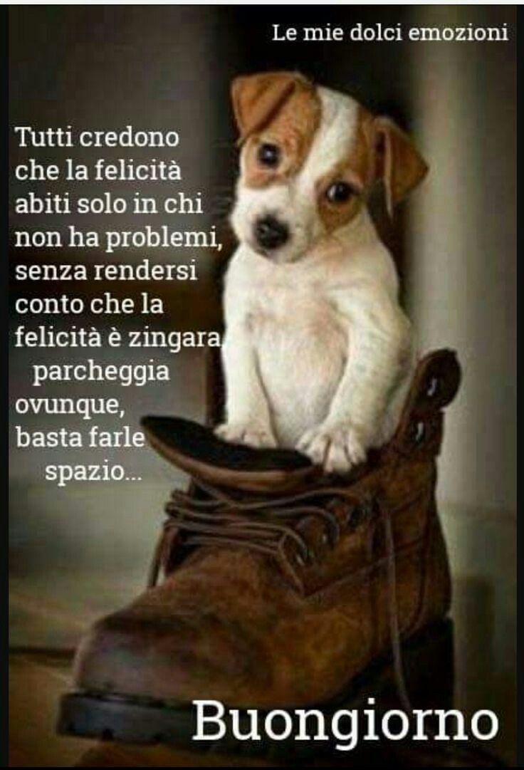 Buongiorno con tenero cane la felicit immagini gratis da for Foto buongiorno gratis