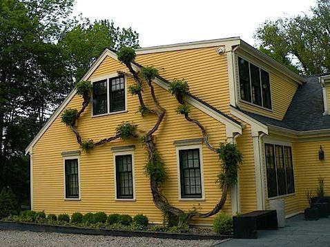 Yellow Ochre Exterior Paint Google Search House Exterior Exterior House Renovation Yellow House Exterior