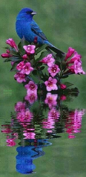 Beautiful Blue Bird And Pretty Pink Flowers
