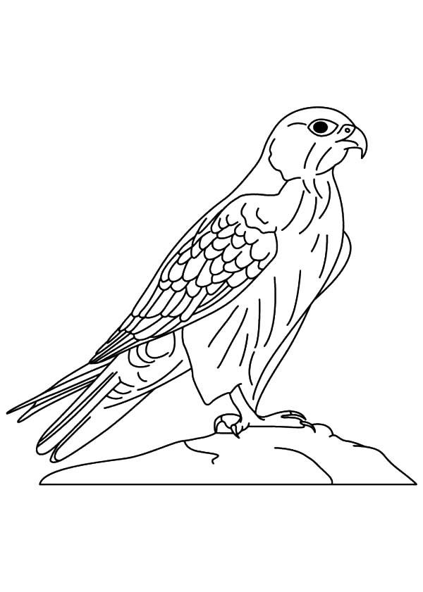 Wild Falcon Bird Coloring Pages Netart Bird Coloring Pages Bird Outline Bird Sketch
