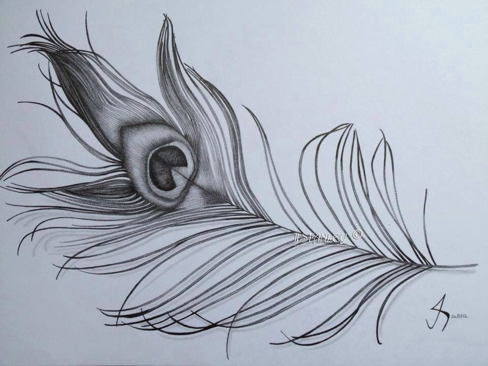 Peacock feather in graphite pencil by jess Stanley art ...