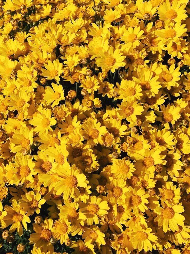 Minimalist Yellow Flower Aesthetic