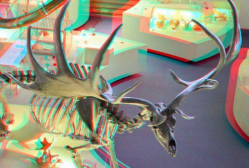 Irish Elk [Megaloceros Giganteus] 3D