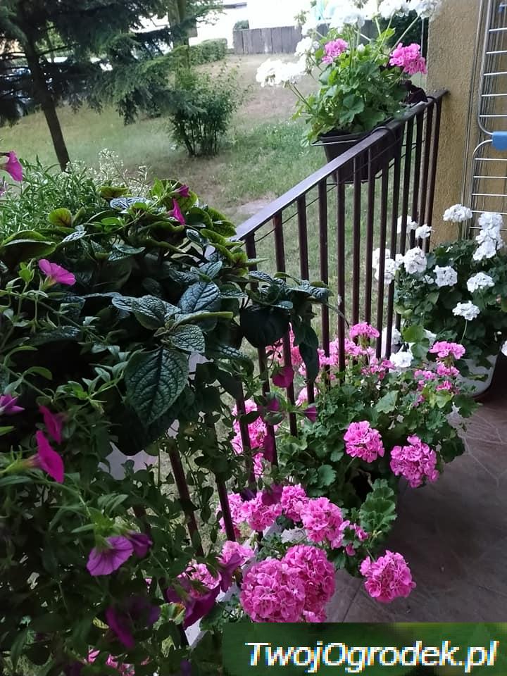 Balkon Inspiracje 2019 Plants