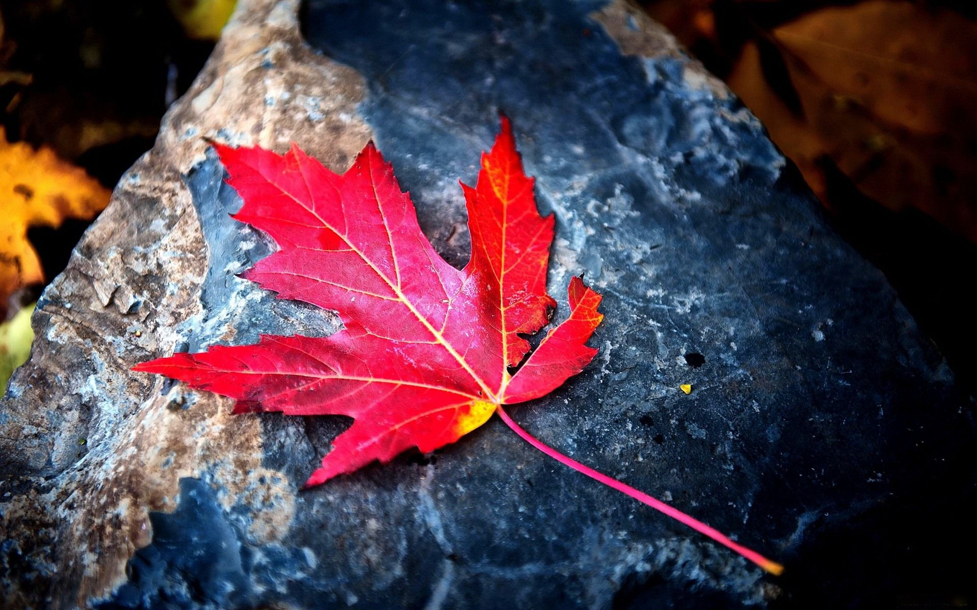 Fantastically colorful leaf, more such nice quality hd
