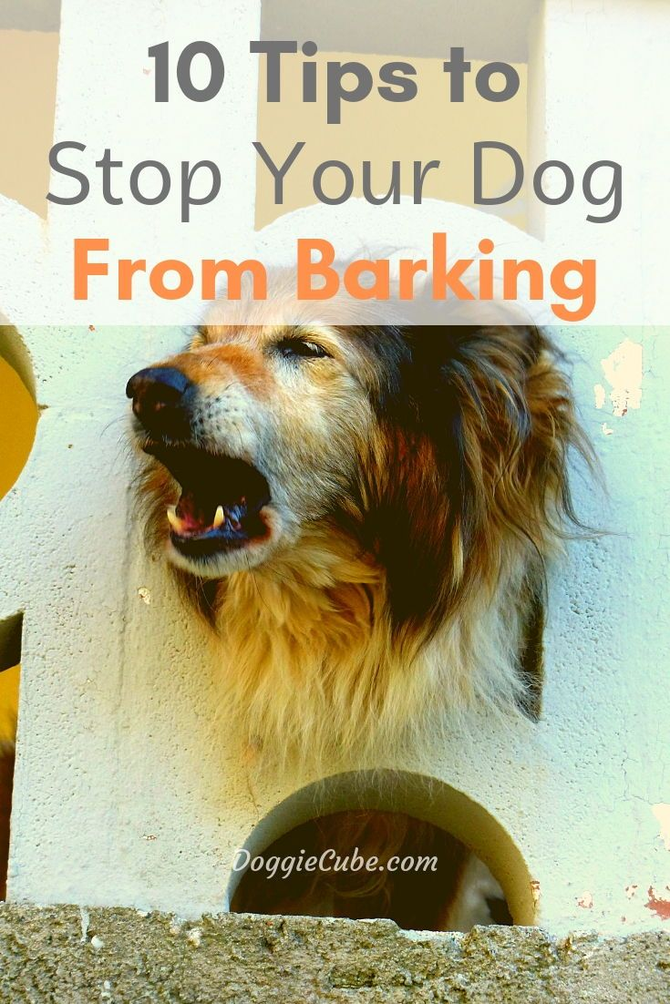 how to stop an aggressive dog from barking