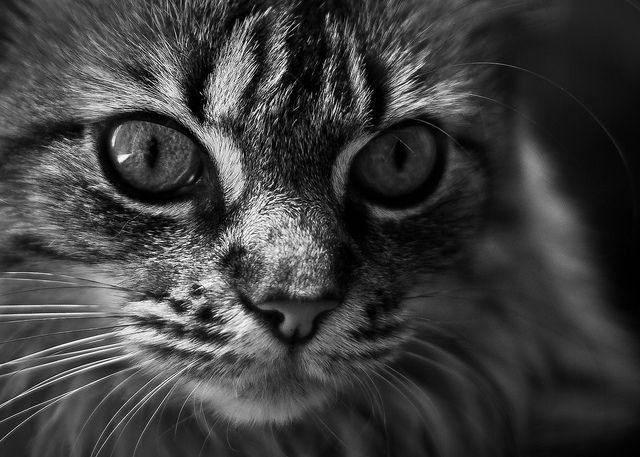 Anis by fabienépé, via Flickr