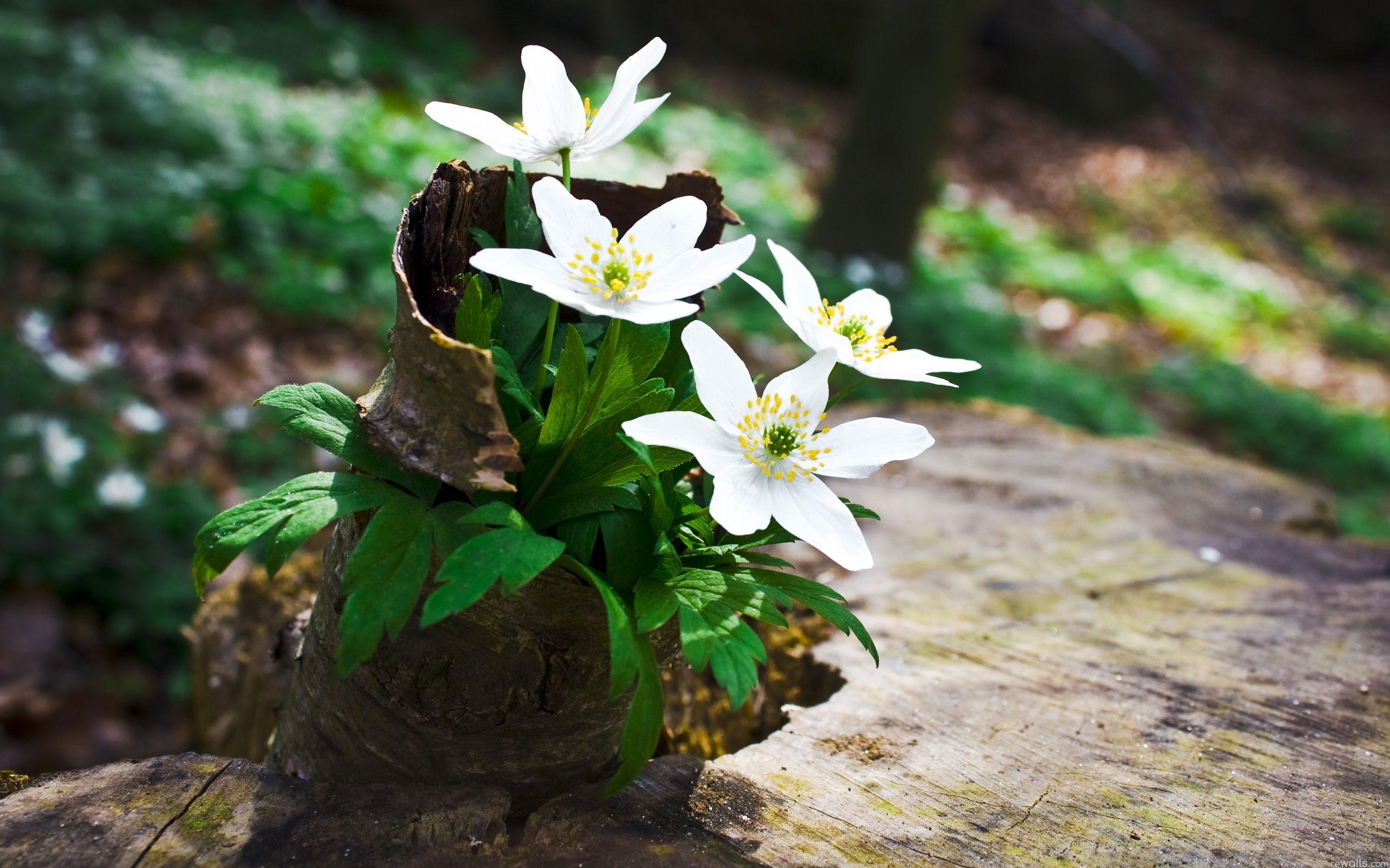 Spring flowers spring wallpaper fanpop fanclubs desktop wallpaper