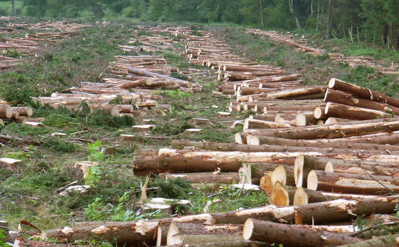 article on danger of deforestation Australia: world leader in deforestation and species extinction  australia is a leader in global deforestation and leads the extinction crisis.