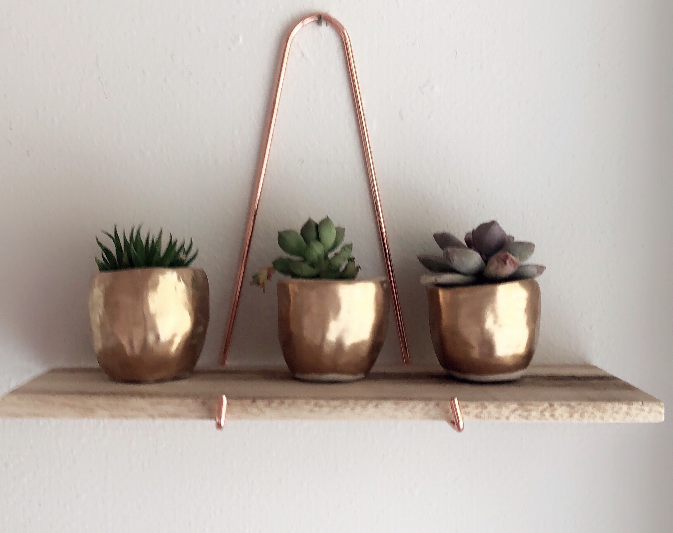 Small Gold Pots For Succulents And Cacti Your Plants Deserve