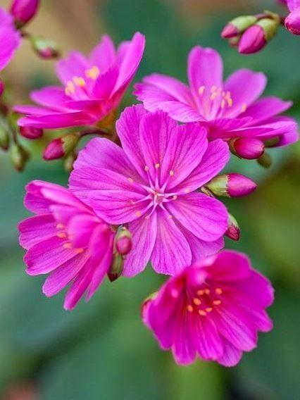 Пин от пользователя Agna на доске ЦВЕТЫ | Красивые цветы ...