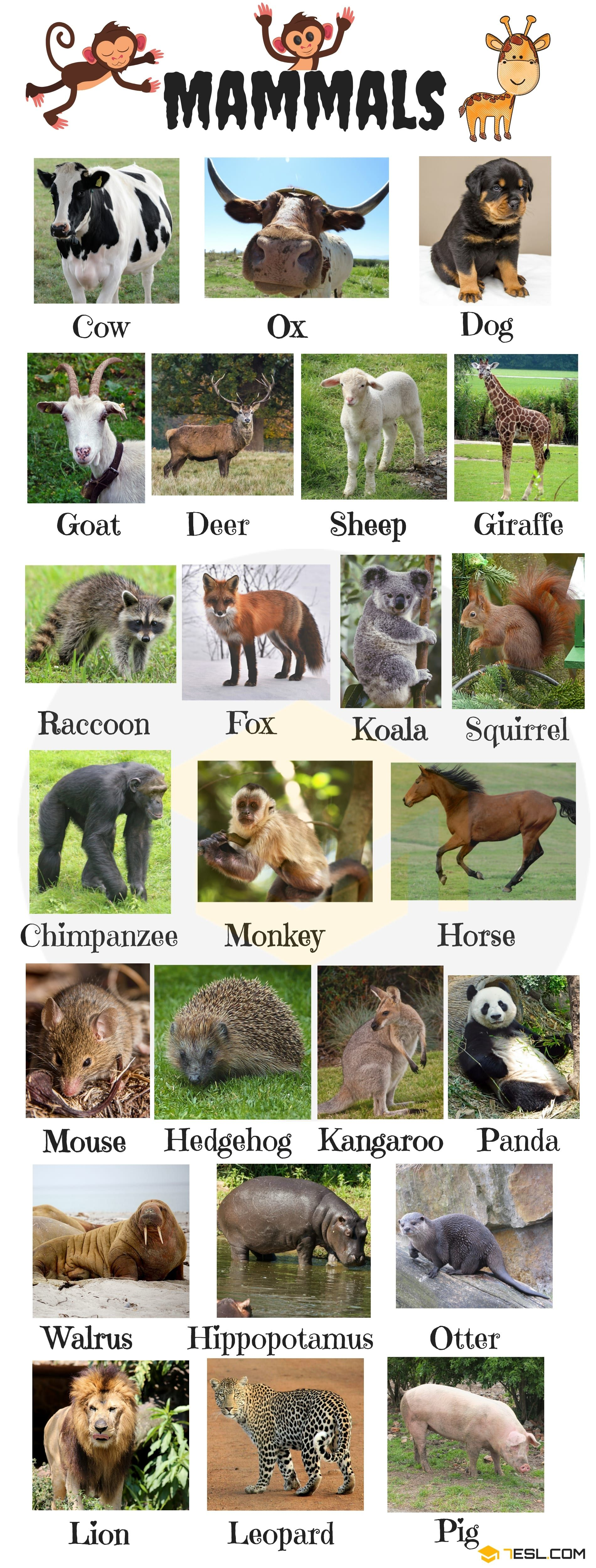 Animal Names: Types Of Animals With List & Pictures - 7 E S L | Animals name  in english, English vocabulary, Mammals