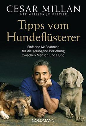 Photo of Raising a dog – five important commands   Tippscout.de