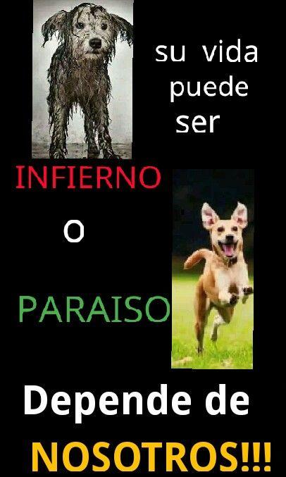 27de Julio Dia Internacional Del Perro Callejero Perros Historias De Perros Adoptar Un Perro