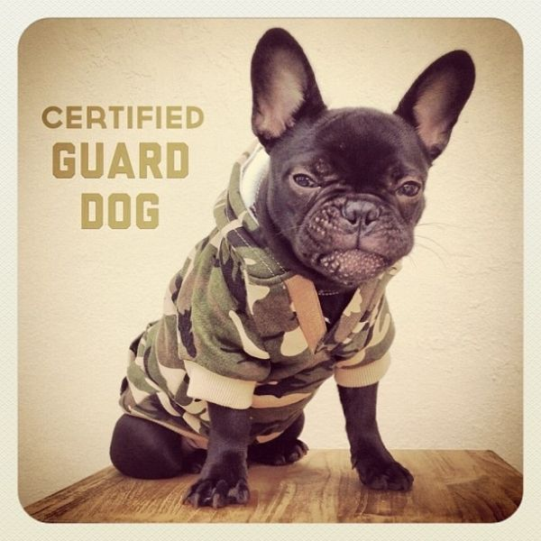 Guard Dog Curated By Desert City Security Inc 2277