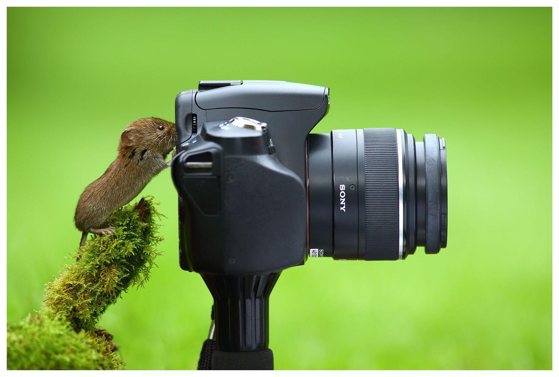 средние фотоохота на птиц объективы ссылку нее