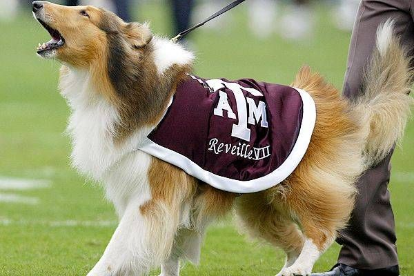 Pin By Unisunn 144 College Football B On Texas A M University Aggies Aggies Mascot Texas A M Aggies
