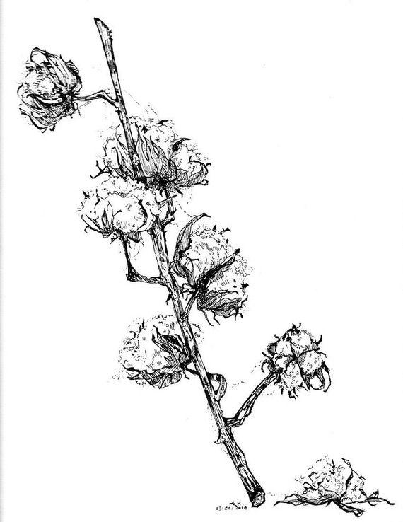Dessin à La Plume Encre De Chine Botanique Branche De